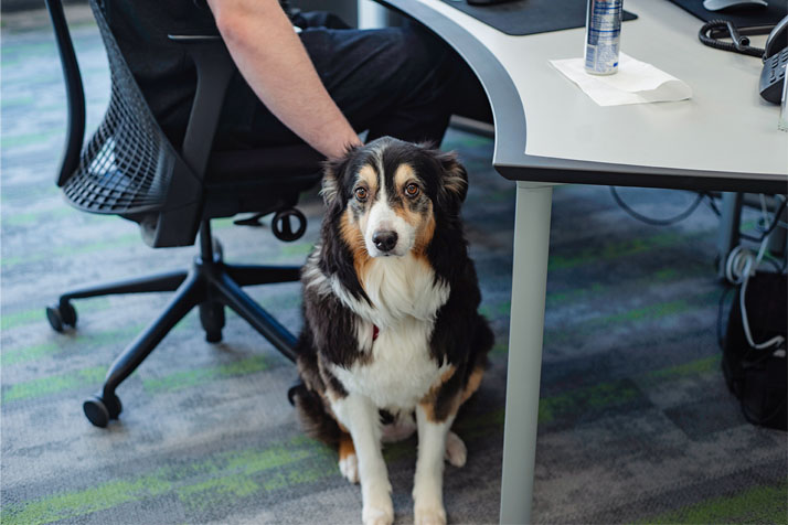 Back40 Office Dog